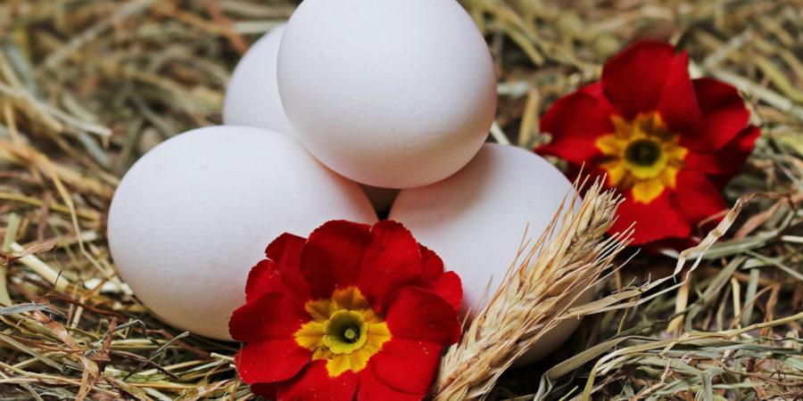 Eier vom glücklichen Huhn